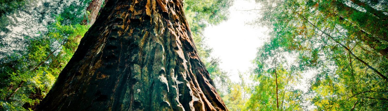 Beautiful-Tree-Wallpaper-Desktop